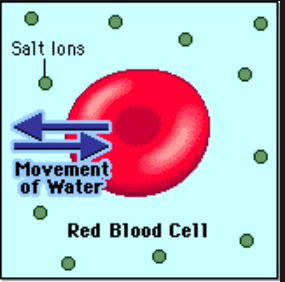 red blood cells   salt utoya